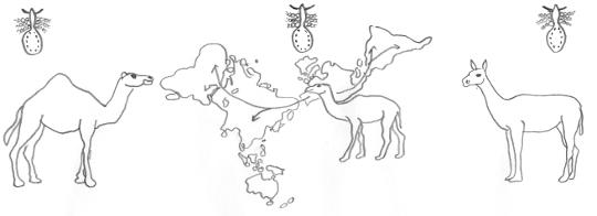 abb - Koevolution Beispiele